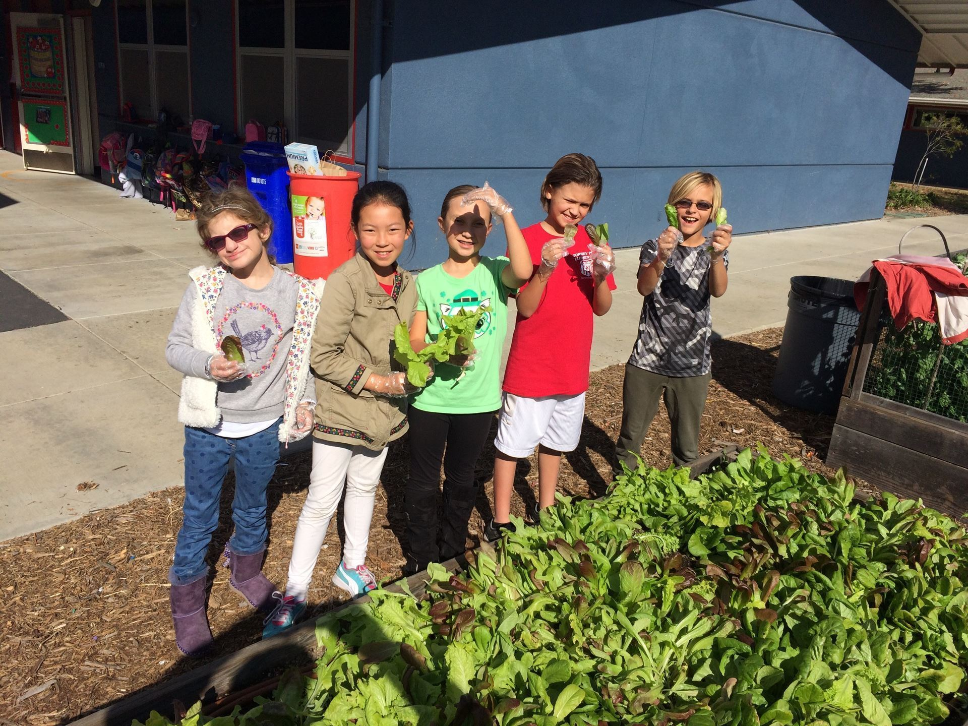 5th Grade Garden Club picking lettuce